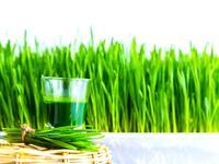 odšťavňování wheatgrass